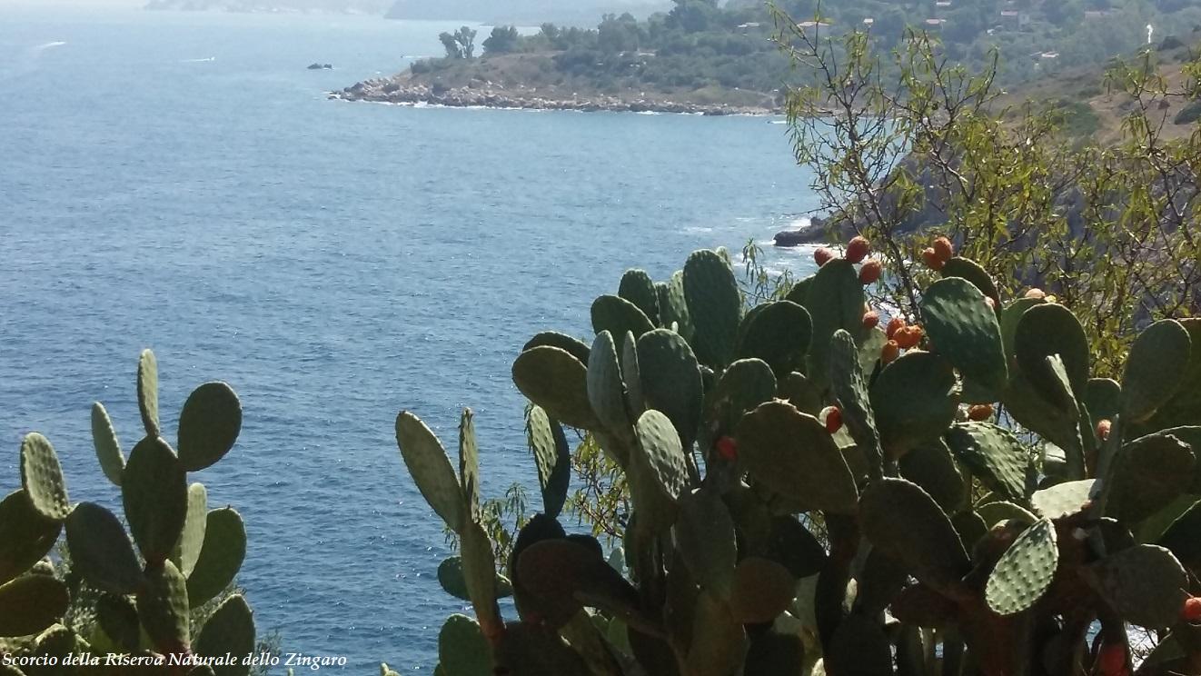 Uno scorcio di mare nella Riserva Naturale dello Zingaro 1